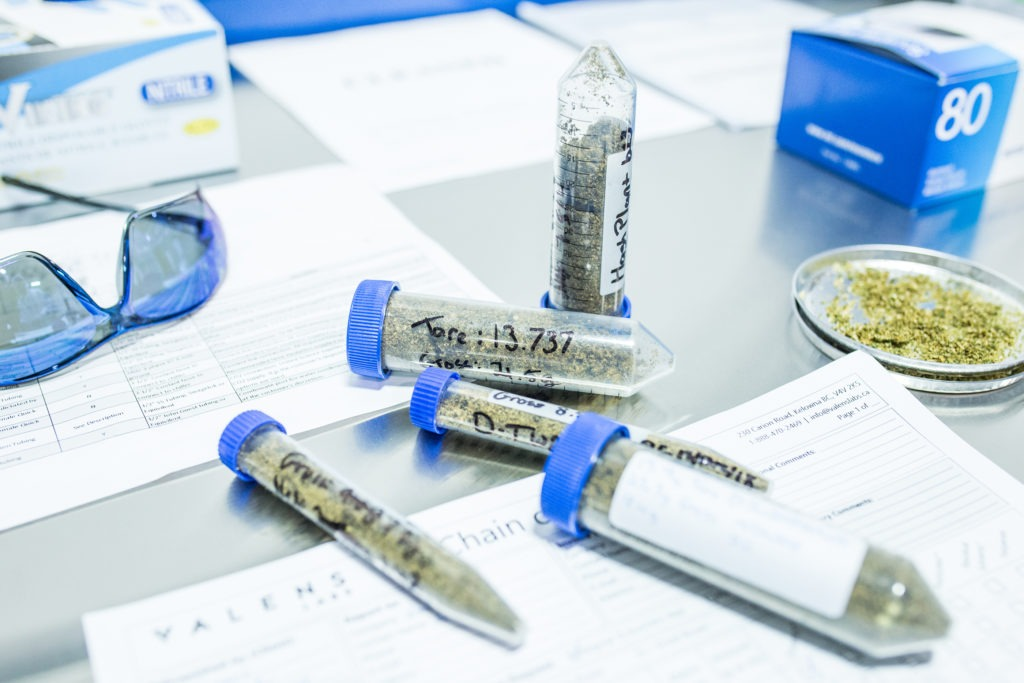 Valens Labs facility table with cannabis samples, goggles, and testing vials